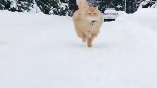 fast runner up cat in cold place