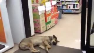 Sleepy Dog Door Stop - Video