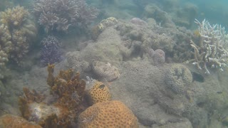 Fish cling to what live coral is left  - Video