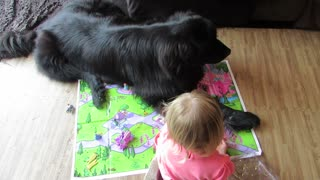 Giant dog destroys toddler's game - Video