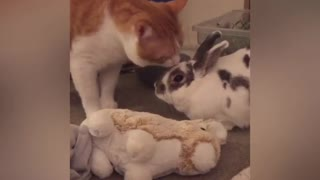 Cat gives kisses to bunny best friend
