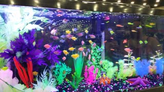 Glow fish at fair - Video