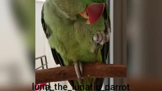 Talking Parrot Adorably Makes Kissing Noises