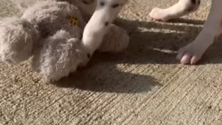 Little Lucy Playing