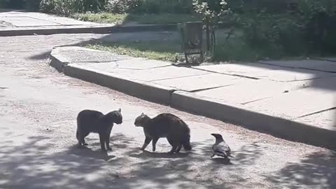 Crow Tries To Break Up Cat FightPolice Evacuate Cats And Dogs From Animal Rescue