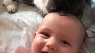 cat caressing baby