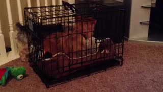 Dog Helps Another Dog Escape Cage