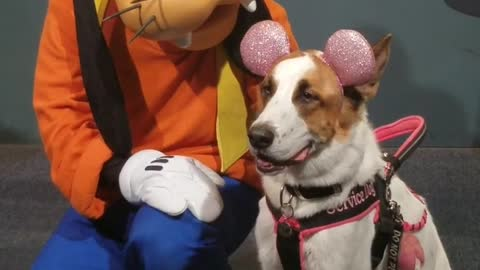 Service dog takes a picture with goofy