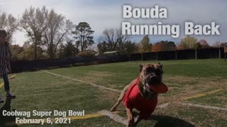 Coolwag Super Dog Bowl Starting Line Up featuring Baxter, Boomer and Bouda