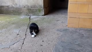 Kitten playing with tail