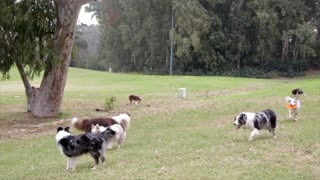 Dog Playing with his friends