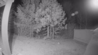 Bear Bites Security Camera