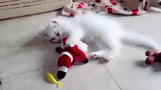 Kitten Playing With Santa Clause