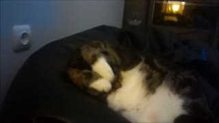 Adorable cat grooming himself in a funny way - Video