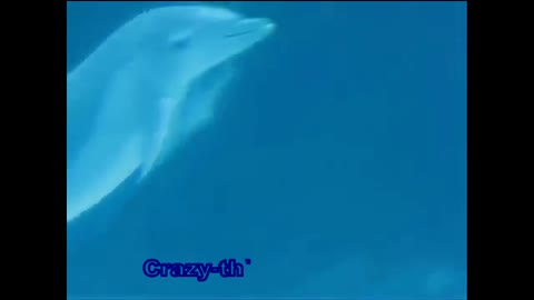 Dolphin's show