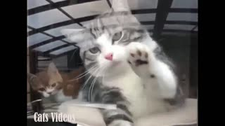 A cat Trying To Hold My Sister's Hand Behind The Glass. - Video