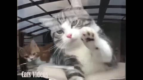 A cat Trying To Hold My Sister's Hand Behind The Glass.