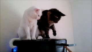 Watch What Happens When These Two Cats Decide To Play With A CD Drive - Video