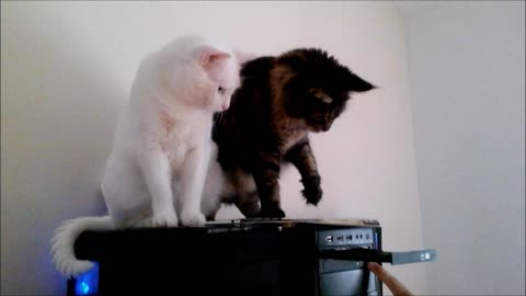 Watch What Happens When These Two Cats Decide To Play With A CD Drive