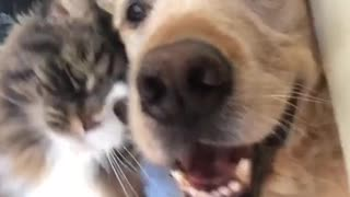 Love Cat Dog - Video