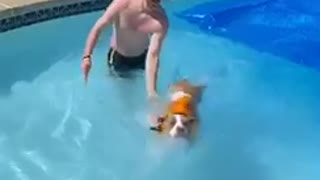 Dog's first swim does not go as planned!