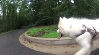 WooFDriver's RUFF Boarding Huskies - Video