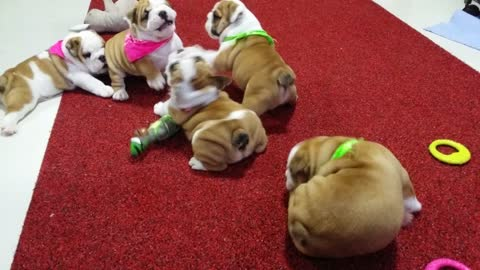 Baby Bully Fight Club, Part 1