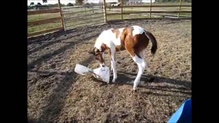 Adorable Two Weeks Old Foal - Video