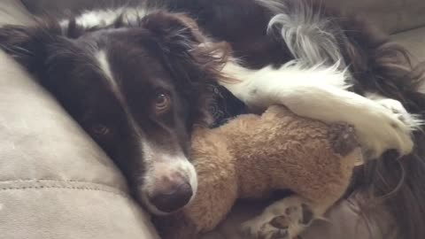 Dog Naps On Couch Snuggling With His Teddy Best Friend