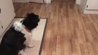 Stubborn dog refuses to eat dinner - Video