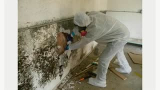 Best Mold Removal NJ - Video