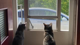 Cats also know Tesla Model X is awesome.