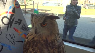 Owl Takes The Tram - Video