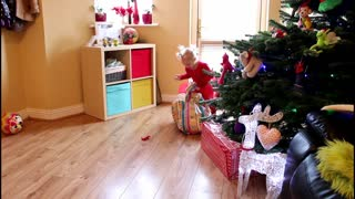 Cute Dog got his own Christmas tree full dog toys - Video