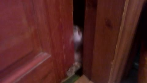 the cat is pounding on the door