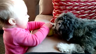 Baby and puppy play together - Video