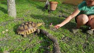 Tortoise Devours Pretty Flower