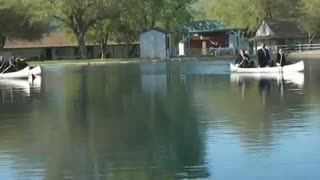 Wonder Valley Ranch: The Great Canoe Race - Video