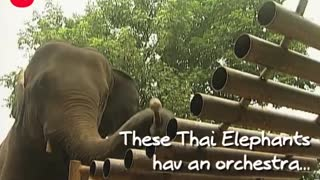 Musical Animals - Video