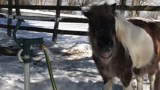 Pony Water Fountain - Video
