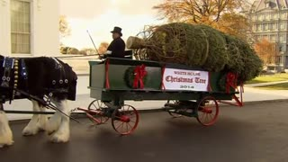 White House Christmas Tree arrives by horse-drawn carriage - Video