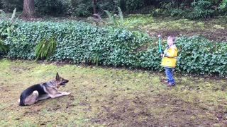 Child has impressive control over huge German shepherd  - Video