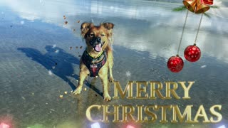 Christmas Greetings from Roo on the Beach