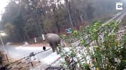 Elephant Lifts Barrier To Cross Train Tracks