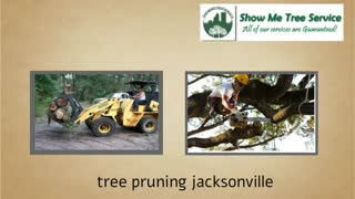 tree trimming jacksonville