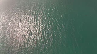 Looking For Sharks With A Drone - Video