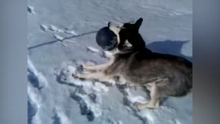Husky Can't Let It Go - Video