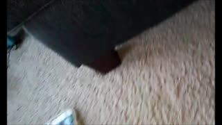 Cat Vs. Phone  - Video
