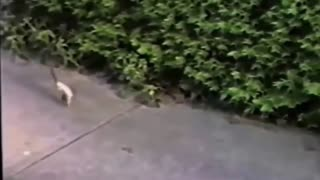 Funny Animals Compilation Funny Videos Of Funny Animals 2015