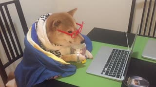 Shiba Inu spends cold nights watching viral videos - Video